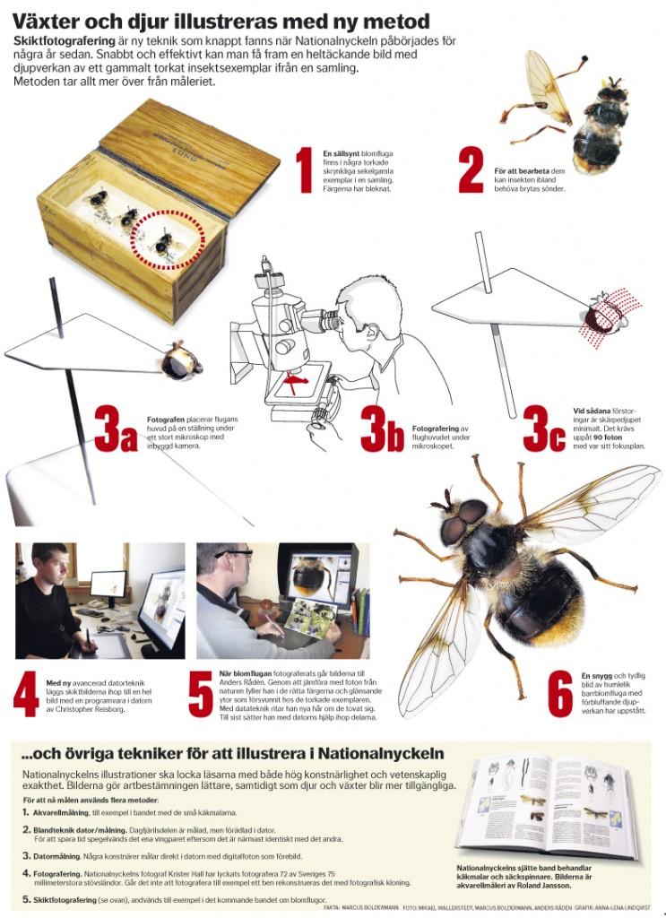 Växter och djur illustreras med ny metod Dagens Nyheter